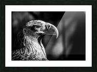 Eagle ap 2046 B&W Picture Frame print