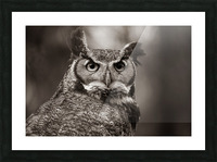 Great Horned Owl ap 2860 B&W Picture Frame print