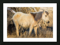 Wild Horse ap 2740 Picture Frame print
