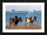 Wild Horses ap 2796 Picture Frame print