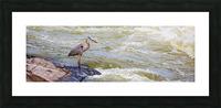 Great Blue Heron ap 2014 Impression et Cadre photo