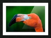 Flamingo Portrait ap 1946 Impression et Cadre photo