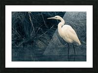 Great White Egret ap 1839 B&W Impression et Cadre photo