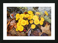 Flowers ap 2222 Picture Frame print