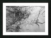 Bird Tracks ap 1605 B&W Picture Frame print