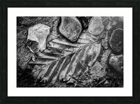 Leaf ap 1931 Picture Frame print