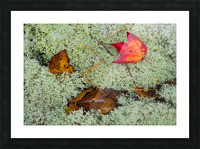 Leaves  N  Lichen ap 1553 Picture Frame print