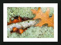 Pin Oak Leaf ap 1557 Picture Frame print