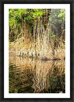 Mangrove roots Picture Frame print