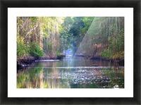 Caroni Swamp   Trinidad Picture Frame print