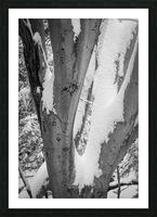 Beech ap 2044 B&W Picture Frame print