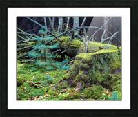 Fallen Giant ap 1513 Picture Frame print