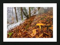Mushroom ap 1576 Picture Frame print