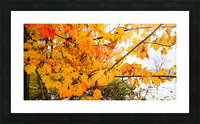 Maple Leaves ap 1589 Picture Frame print