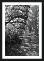 Nature Trail ap 2081 B&W Picture Frame print