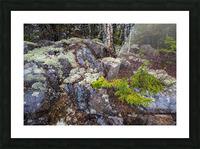 Moss   Lichen ap 2294 Picture Frame print