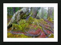 Moss   Lichen ap 2196 Picture Frame print