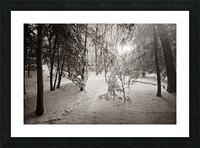 Sunlight ap 2731 B&W Picture Frame print