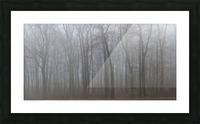 Treeline apmi 1547 Picture Frame print