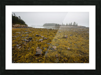 Low Tide ap 2271 Picture Frame print