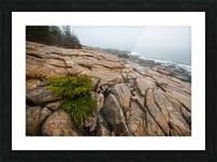 Lone Pine ap 2286 Picture Frame print