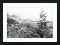 Lone Pine ap 2284 B&W Picture Frame print