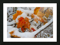 Early Snow ap 1571 Picture Frame print