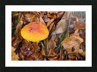 Mushroom ap 1579 Picture Frame print