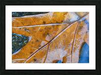 Leaf ap 1970 Picture Frame print