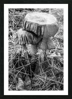 Mushrooms ap 1558 B&W Picture Frame print