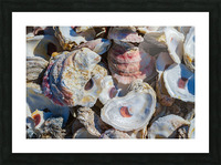 Shells ap 1747 Picture Frame print