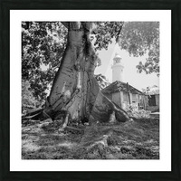 Negril Lighthouse ap 1516 B&W Picture Frame print