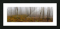 Mystic Forest apmi 1620 Picture Frame print