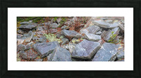 Nature apmi 1606 Picture Frame print