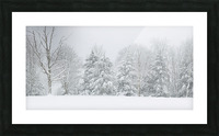 Treeline apmi 1569 Picture Frame print