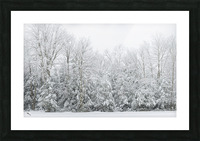 Treeline apmi 1573 Picture Frame print