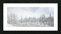 Treeline apmi 1588 Picture Frame print