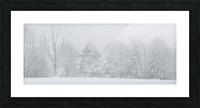 Treeline apmi 1571 Picture Frame print