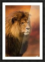 Lion Legacy - Lion Art by Jordan Blackstone Picture Frame print