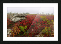 Alpine Tundra apmi 1812 Picture Frame print