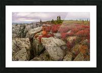 Bear Rocks Preserve apmi 1790 Picture Frame print