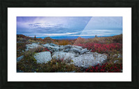 Blueberries apmi 1779 Picture Frame print