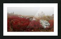 Blueberries and Boulders apmi 1808 Picture Frame print