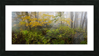 Fall Color apmi 1865 Picture Frame print