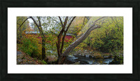 Maple Tree apmi 1919 Picture Frame print