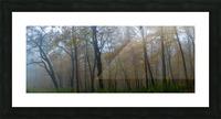 Treeline apmi 1867 Impression et Cadre photo