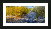 Red Creek Aspens apmi 1769 Picture Frame print