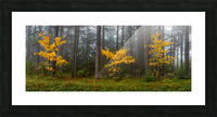 Touch of Color apmi 1849 Picture Frame print