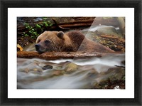 Never Give Up - Wilderness Art by Jordan Blackstone Picture Frame print