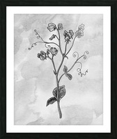Sweet Pea Simple Gray Botanical Flower On Watercolor Marble  Picture Frame print